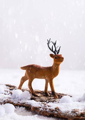 Deer Antler Photograph - Reindeer In Snow by Amanda Elwell