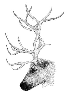 Drawing - Reindeer by Scott Woyak