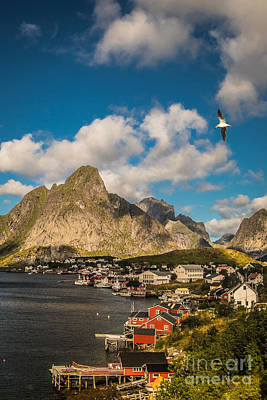 Reine In The Sun Art Print