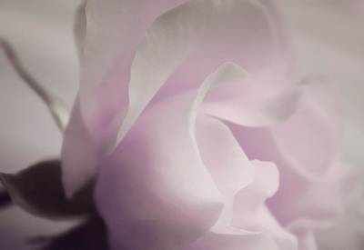 Lilac Photograph - Rejoicing Beauty by The Art Of Marilyn Ridoutt-Greene