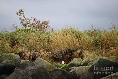 Photograph - Rekjavik Bird by Mary-Lee Sanders