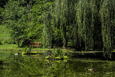 Photograph - Relax By Pond by Allen Nice-Webb