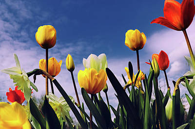Photograph - Relax With The Tulips by Karen Stahlros