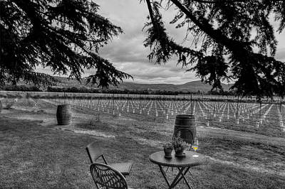 Photograph - Relaxed Scene At Vineyard by Dan Friend