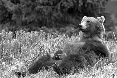 Photograph - Relaxing Grizzly By Bow Lake by Adam Jewell