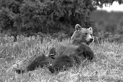 Photograph - Relaxing In The Grass By Bow Lake Black And White by Adam Jewell