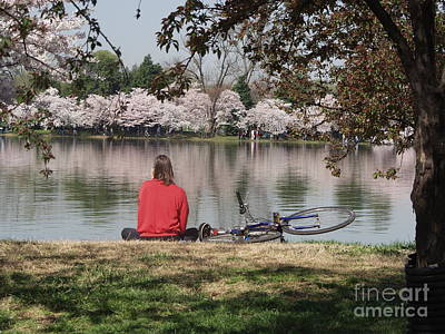 Photograph - Relaxing Under Cherry Blossoms by April Sims