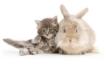 Photograph - Relaxing With Rabbit by Warren Photographic