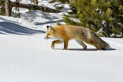 Photograph - Relentless Hunter by Jack Bell