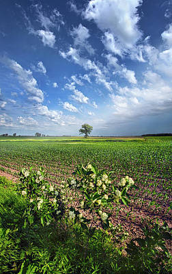 Photograph - Remain Steadfast by Phil Koch
