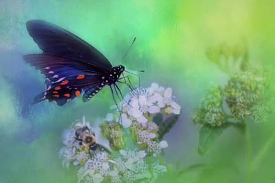 Butterfly On Blue Flower Photograph - Remaining Nectar Butterfly Art by Jai Johnson