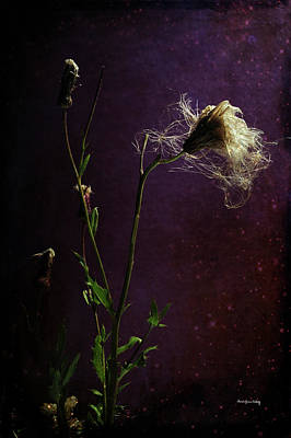 Photograph - Remains Of Summer by Randi Grace Nilsberg