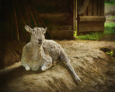 Photograph - Rembrandt - A Sheep by Nikolyn McDonald
