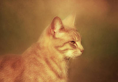 Photograph - Remember-i Own You-cat-art by Georgiana Romanovna