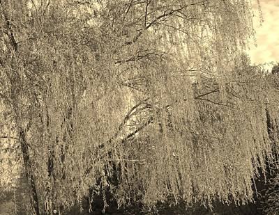 Remember Our Willow Art Print