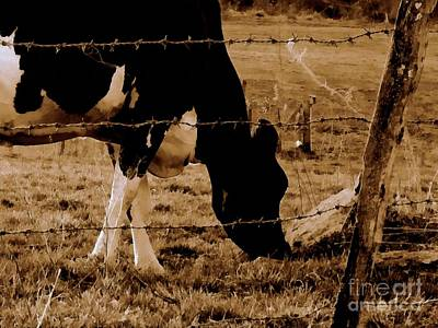 Photograph - Remember The Day - Sepia Brown Black And White Cow Grazing by Janine Riley