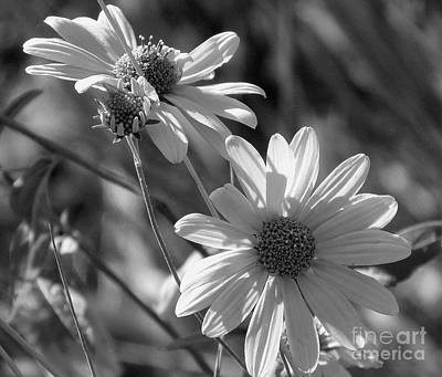 Photograph - Remnants Of Summer  by Janice Westerberg