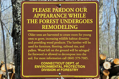 Photograph - Remodeling The Forest by David Freuthal