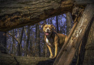 Photograph - Remy 1 by Jorge Perez - BlueBeardImagery