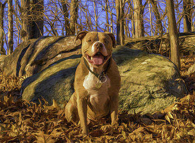 Photograph - Remy 3 by Jorge Perez - BlueBeardImagery
