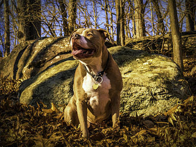 Photograph - Remy 4 by Jorge Perez - BlueBeardImagery