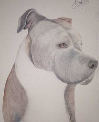 Pitbull Drawing - Remy Bear  by Jessica Malise