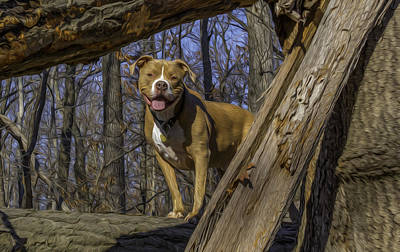 Photograph - Remy In Tree Oil Paint More Pop by Jorge Perez - BlueBeardImagery