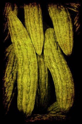 Photograph - Renaissance Chinese Cucumber by Jennifer Wright