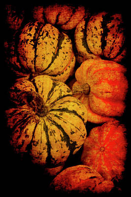 Photograph - Renaissance Squash by Jennifer Wright