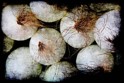Photograph - Renaissance White Onions by Jennifer Wright