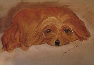 Pastel - Renard Watching by Joan Mansson
