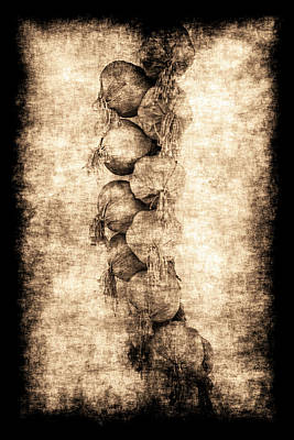 Photograph - Renasiaance Garlic by Jennifer Wright