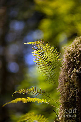 Renewal Ferns Art Print by Mike Reid