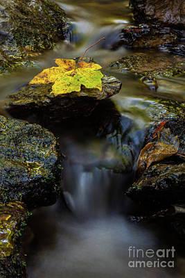 Photograph - Renewal by Mark Alder