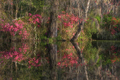 Photograph - Renewal, Reflected by Kim Carpentier