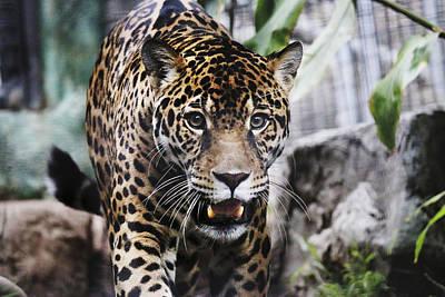 Photograph - Renna's Jaguar by Dan McGeorge