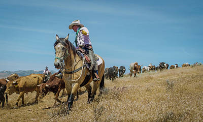 Photograph - Reno Cattle Drive 10 by Rick Mosher
