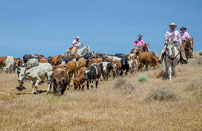 Photograph - Reno Cattle Drive 11 by Rick Mosher