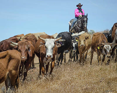 Photograph - Reno Cattle Drive 13 by Rick Mosher
