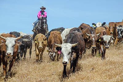 Photograph - Reno Cattle Drive 14 by Rick Mosher