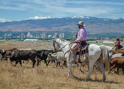Photograph - Reno Cattle Drive 16 by Rick Mosher