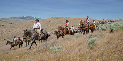 Photograph - Reno Cattle Drive 2 by Rick Mosher