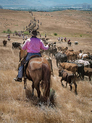 Photograph - Reno Cattle Drive 22 by Rick Mosher