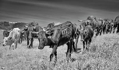 Photograph - Reno Cattle Drive 23 Bw by Rick Mosher