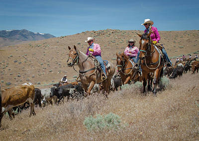 Photograph - Reno Cattle Drive 3 by Rick Mosher
