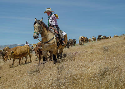 Photograph - Reno Cattle Drive 9 by Rick Mosher