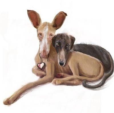Rescued Greyhound Digital Art - Repose by Hound Sanctuary