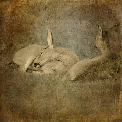 Photograph - Repose by Sally Banfill