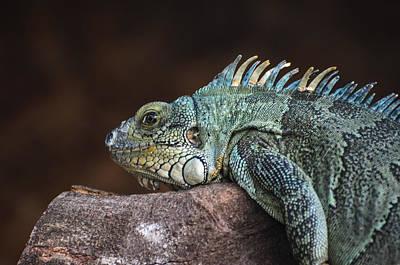 Reptile Art Print by Daniel Precht
