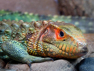 Photograph - Reptile by Jeff Brunton
